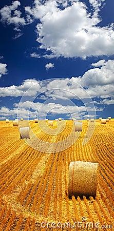 Free Farm Field With Hay Bales Royalty Free Stock Photos - 12612418