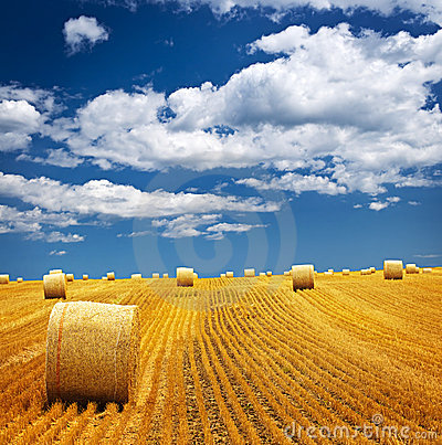 Free Farm Field With Hay Bales Stock Photo - 12612460