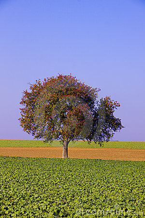 Farm fields with lone tree