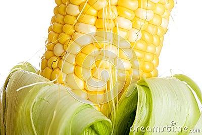 Farm fresh corn on the cob