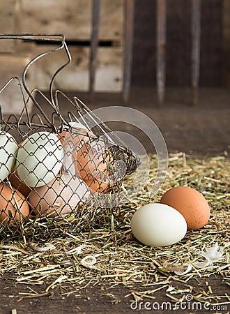 Free Farm Fresh Eggs Stock Image - 30910061