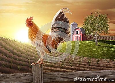 Farm fresh morning