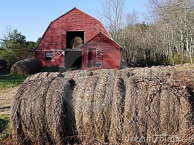 Farm: hay bales with old red barn - h