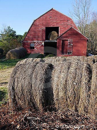 Farm: hay bales with old red barn - v