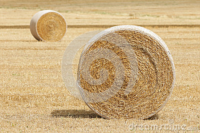 Farm Hay Harvest