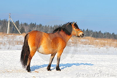 Farm horse in winter paddock