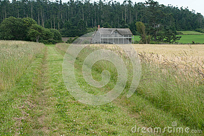 Farm house in a wheat field