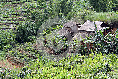 Farm houses and tea plantation