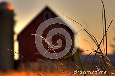 Farm Prairie Grass