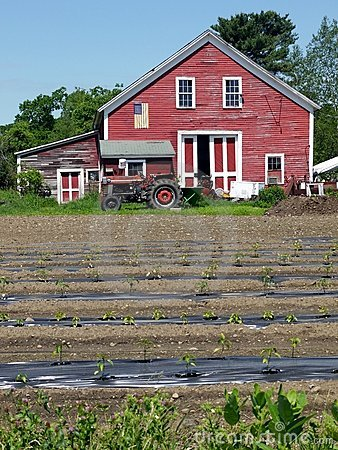 Farm: red barn with seedlings