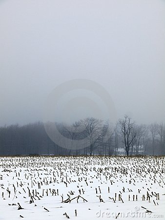 Farm: winter snow mist corn field