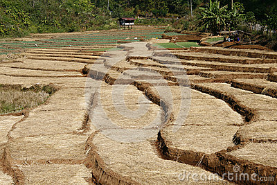 Farm step