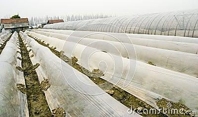 Farm tent 2