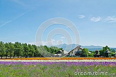 Farm Tomita, Furano, Hokkaido, Japan Editorial Image