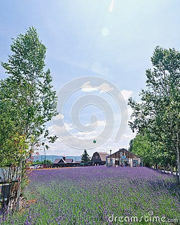Farm Tomita, Furano, Hokkaido, Japan Editorial Photo
