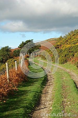 Farm Track in The Autumn