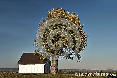 Farm with tree