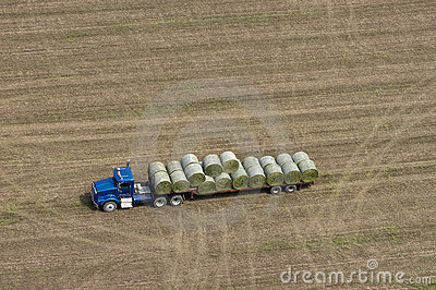 Farm Truck Loading Hay Bales for Dairy Cows