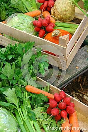Farm vegetable market