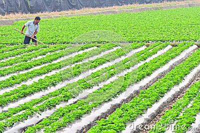 Farm work Editorial Photo
