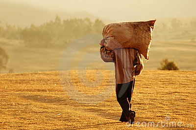 Farm Worker in Peru