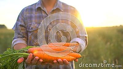 Farmer που κρατά στα χέρια το βιολογικό οργανικό προϊόν των καρότων Αγορά της Farmer έννοιας, οργανική καλλιέργεια, αγροτική συγκ απόθεμα βίντεο