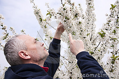 Farmer checking cherry flowers