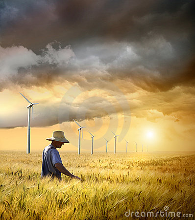 Free Farmer Checking His Crop Of Wheat Stock Photo - 15189300
