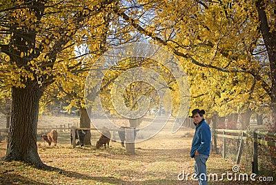 Farmer checks the cows