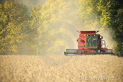 Farmer combining soybeans