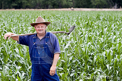 Farmer in the corn fields