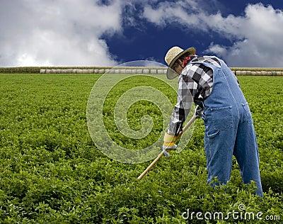 Farmer cultivating