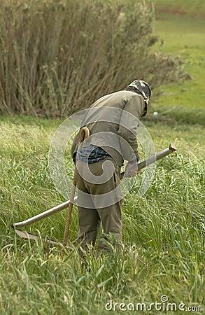 Farmer cutting the grass