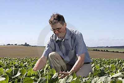 Farmer examining the crop