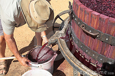 Farmer extracting red grape juice for wine-making Editorial Stock Photo