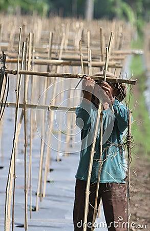 Farmer Editorial Image