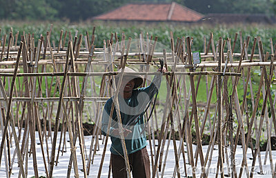 Farmer Editorial Photo