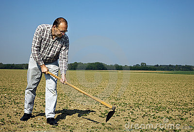 Farmer on the field with young plants
