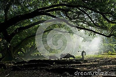 Farmer and his water buffalo