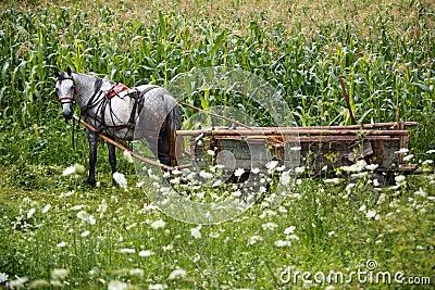 Farmer horse