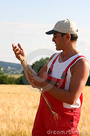 Free Farmer Inspecting The Barley Royalty Free Stock Images - 658829