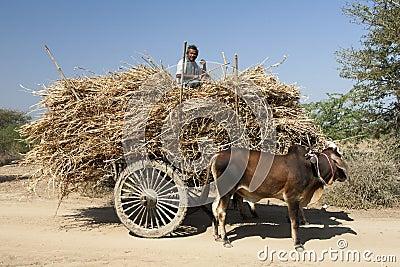 Farmer in Bagan Editorial Stock Image
