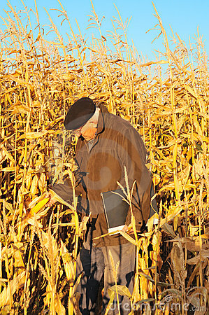 Farmer look on maize