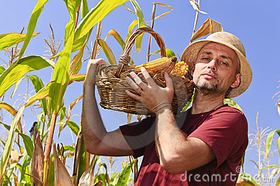 Farmer with maize basket