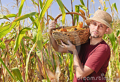 Farmer with maize in basket