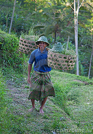 Free Farmer On The Rice Field Stock Images - 19859734