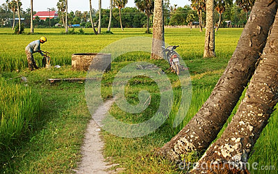 Farmer prepare spray chemicals  on rice field at sunset Editorial Stock Image