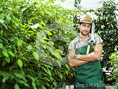 Farmer pruning plants in a greenhouse Stock Photo