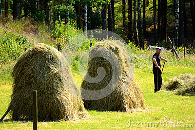 Farmer puts up hay on long drying racks. Editorial Image