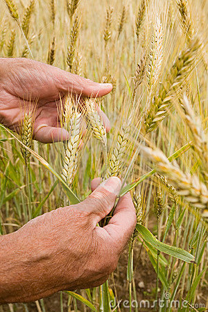 Free Farmer S Hands Stock Images - 5851994